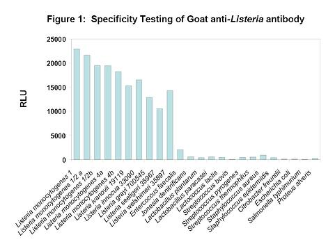 Specificity Testing of Goat anti-Listeria antibody.jpg